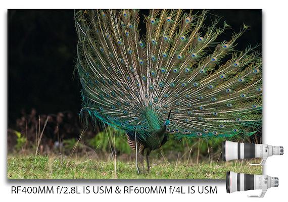RF 400mm f 2.8L IS USM dan RF600mm f 4L IS USM
